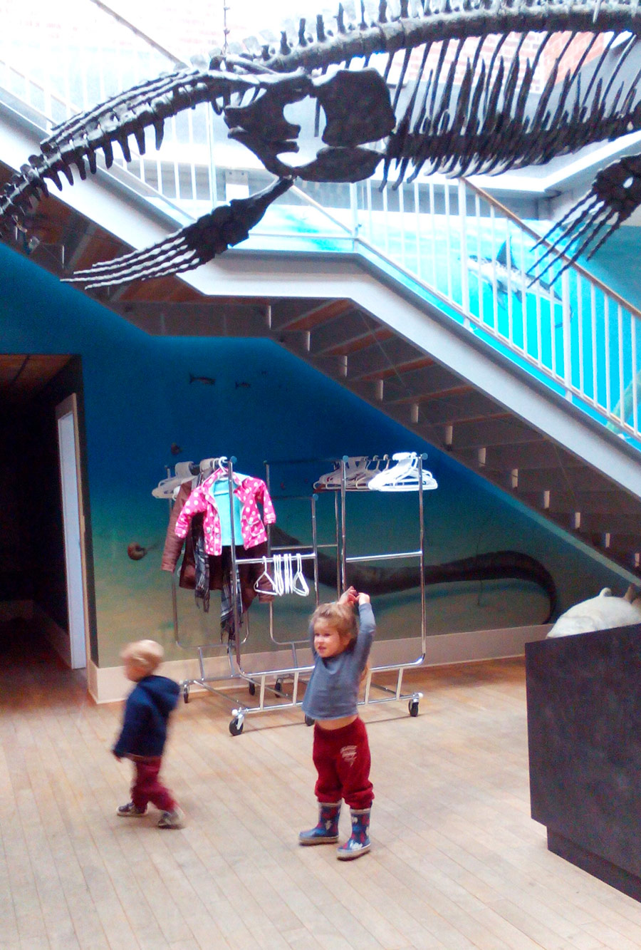 Courtenay and District Museum and Palaeontology Centre kids whale skeleton toddlers