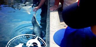 feeding seals at Fisherman's Wharf in Victoria BC